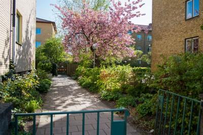 Blommande träd en vårdag hos Brf Ronnebygården.